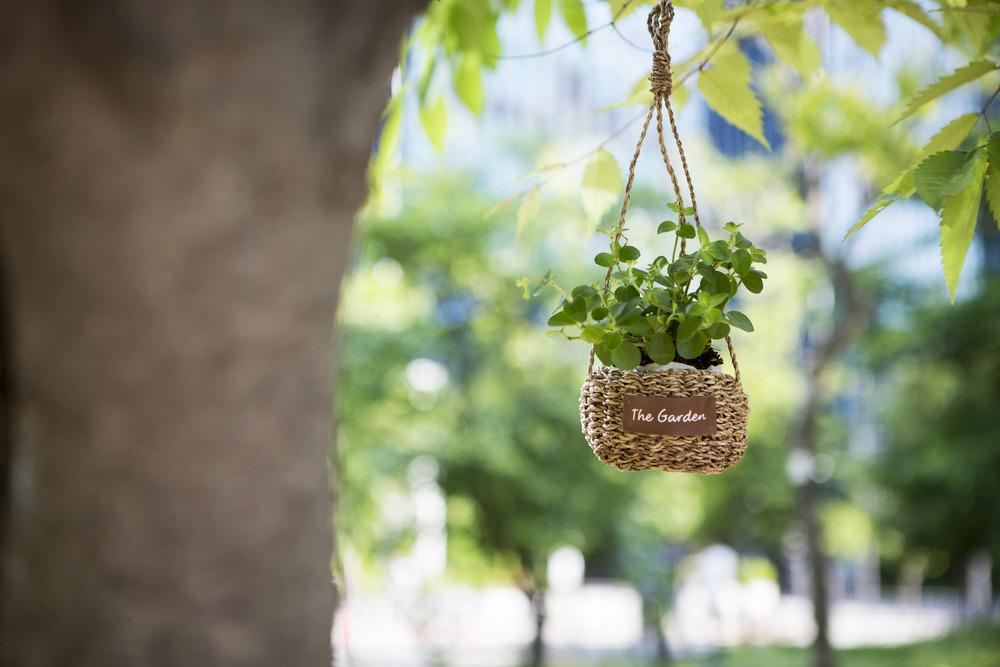식물로 보는 나의 인생