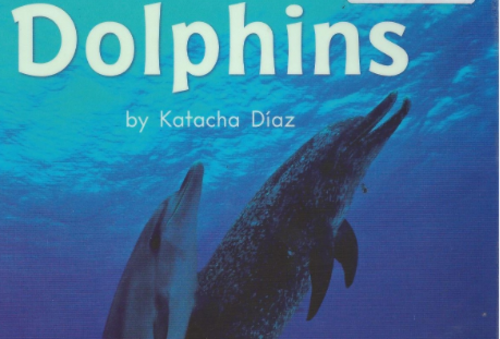 Green103 All About Dolphins