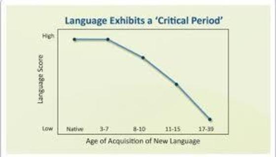 언어습득의 최적시기