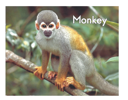 Green16 Monkey (Level A)